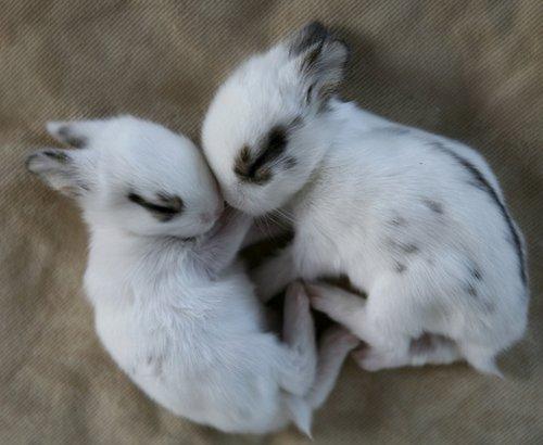 2008, 12-28 Daily Bunny