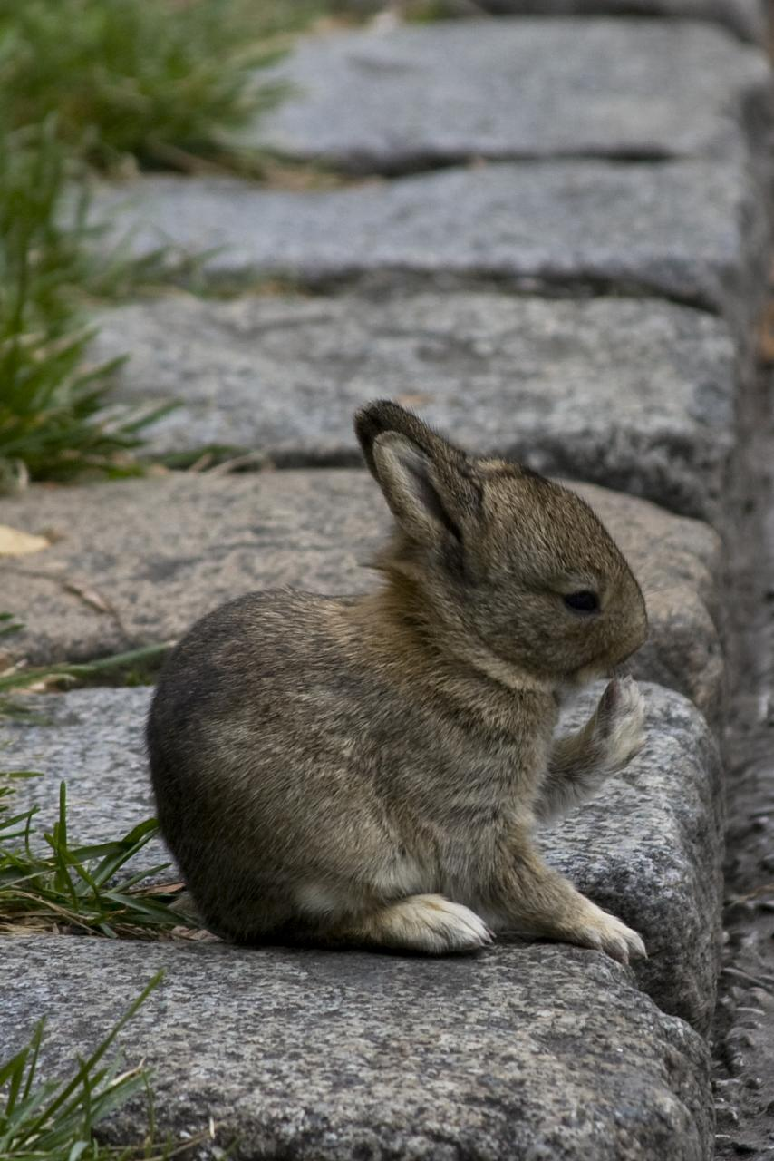 2008, 12-29 Daily Bunny