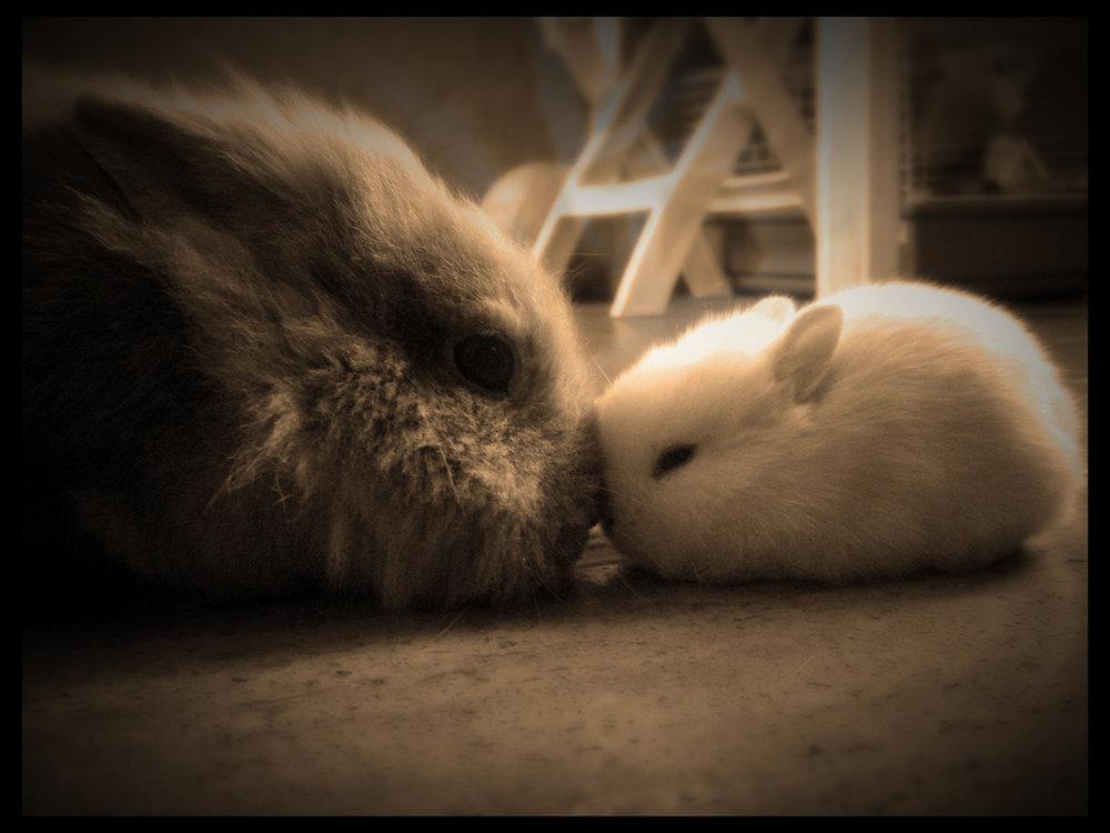 2009, 1-1 Daily Bunny