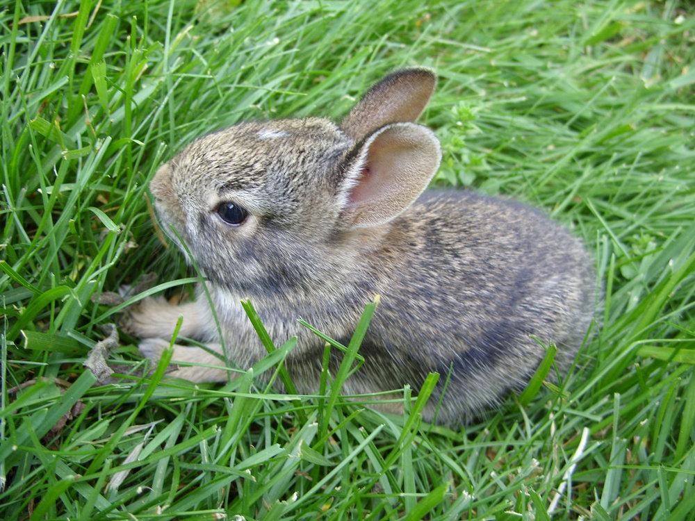 2009, 1-2 Daily Bunny