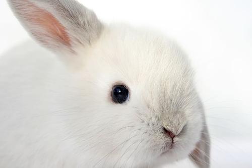 2009, 1-5 Daily Bunny