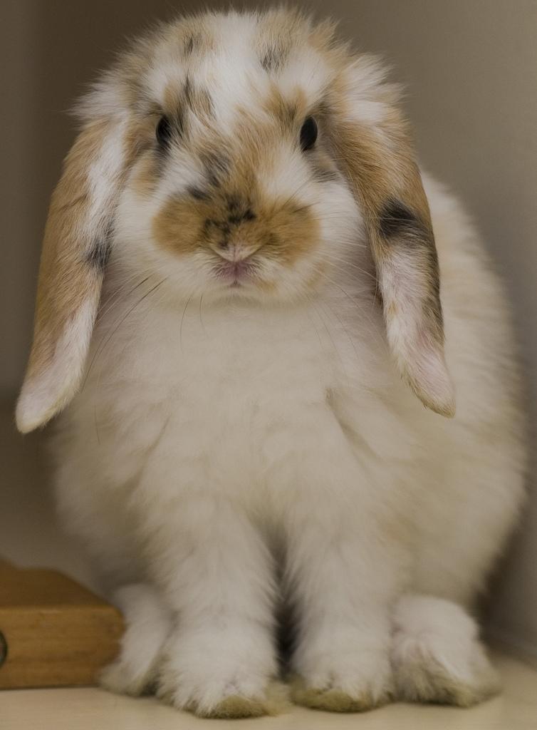 2009, 1-10 Daily Bunny