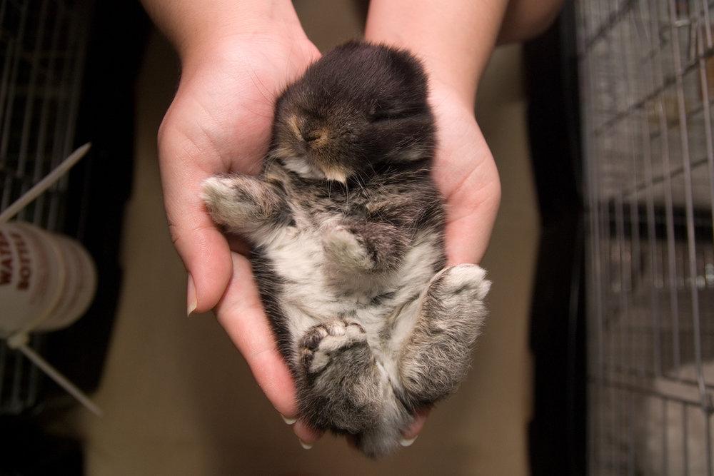 2009, 1-11 Daily Bunny