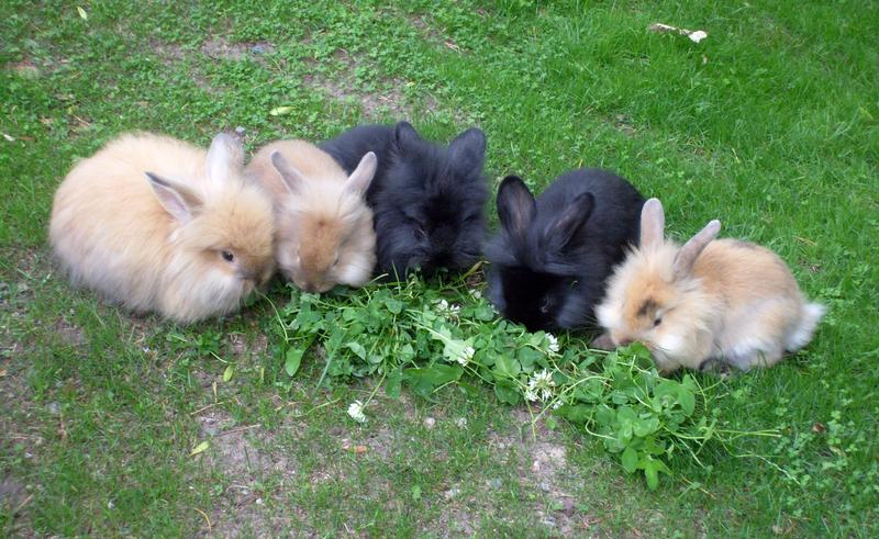 2009, 1-15 Daily Bunny