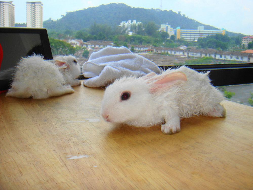 2009, 1-6 Daily Bunny