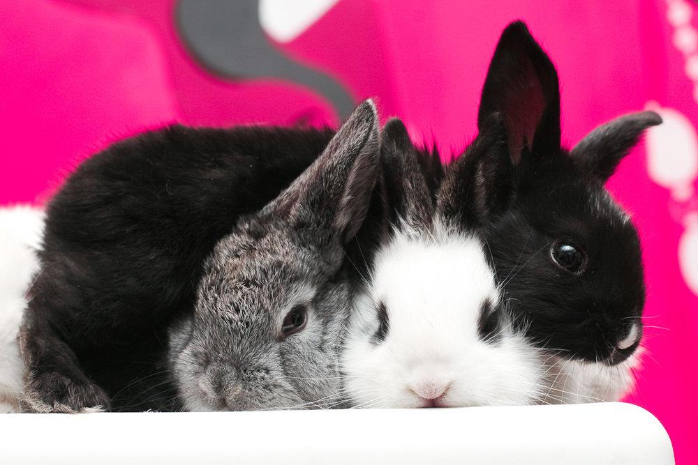 2009, 1-18 Daily Bunny