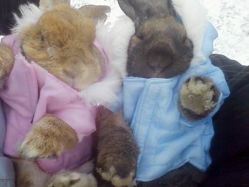 2009, 1-19 Daily Bunny