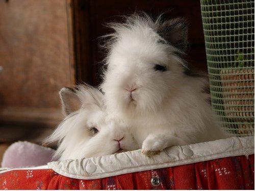 2009, 1-20 Daily Bunny