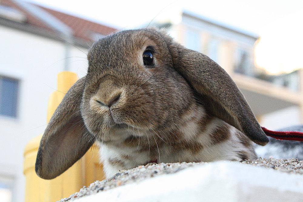 2009, 1-21 Daily Bunny