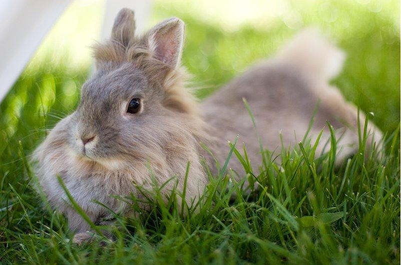 2009, 1-23 Daily Bunny
