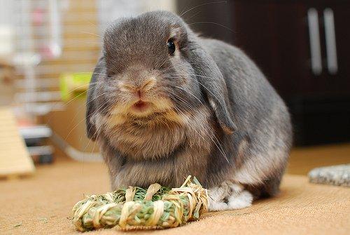 2009, 1-24 Daily Bunny