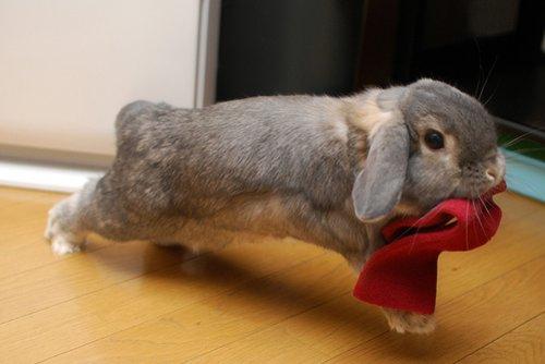 2009, 1-25 Daily Bunny