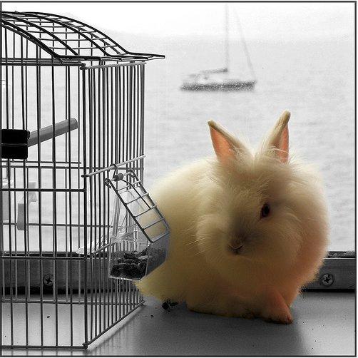 2009, 1-27 Daily Bunny