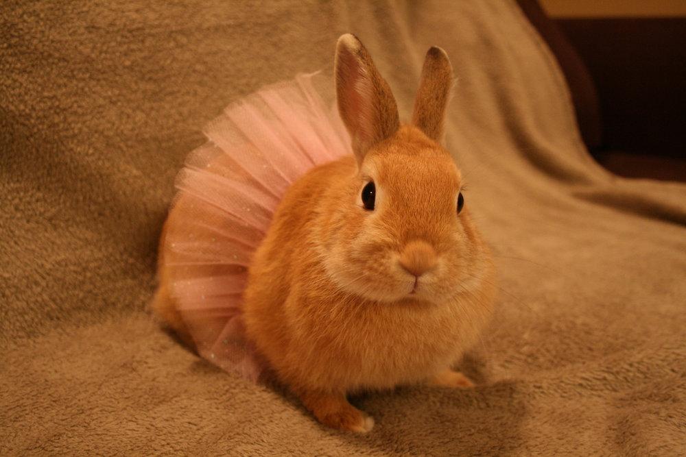 2009, 1-28 Daily Bunny