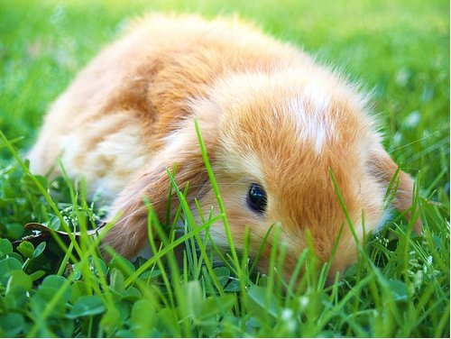 2009, 1-29 Daily Bunny