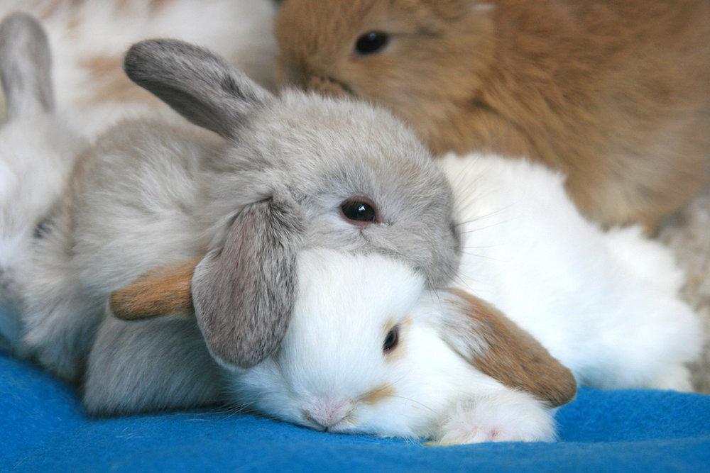 2009, 1-30 Daily Bunny