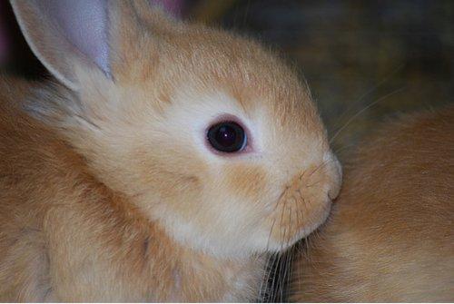 2009, 1-31 Daily Bunny