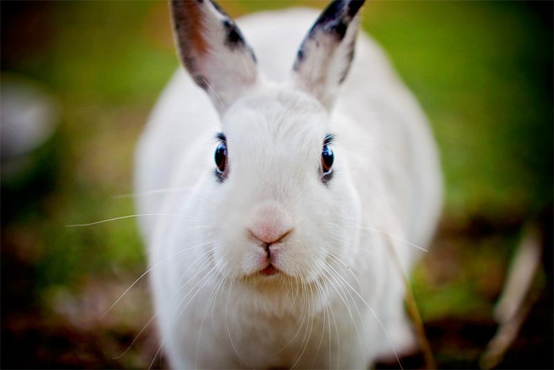 2009, 2-1 Daily Bunny