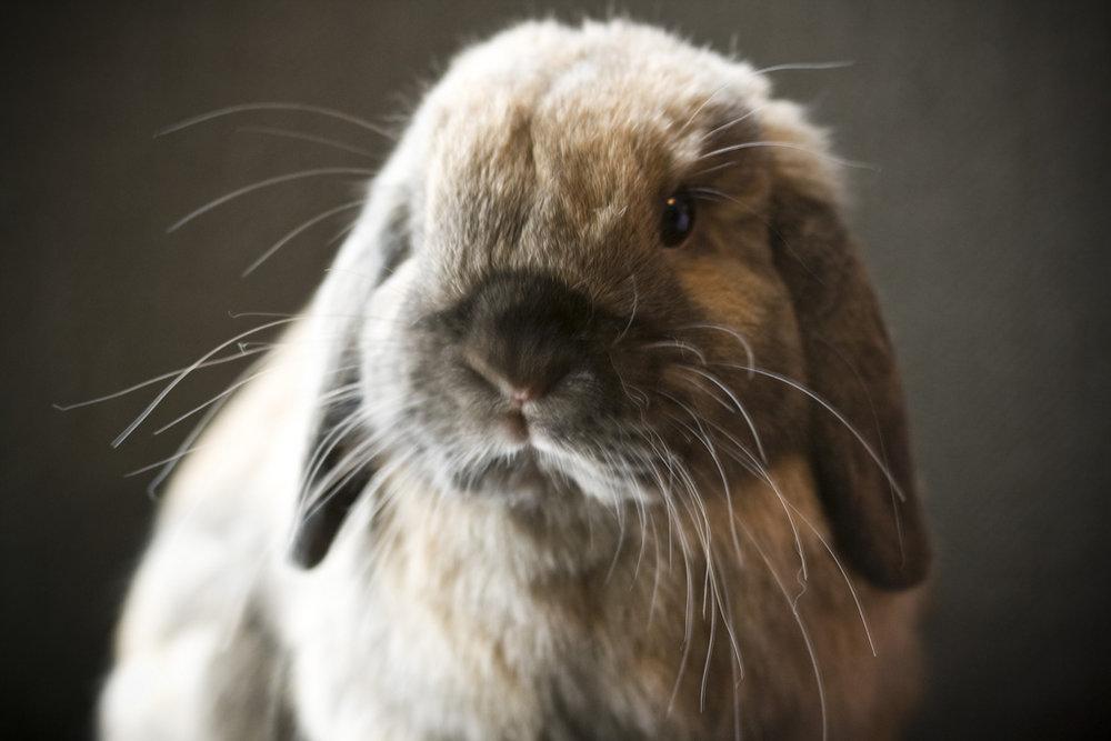 2009, 2-5 Daily Bunny