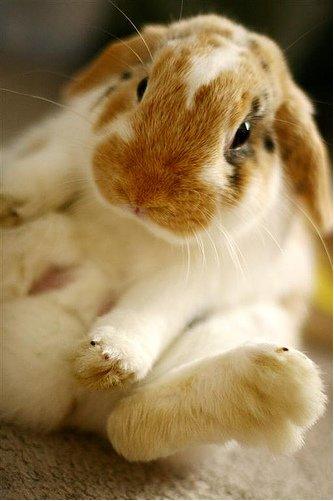 2009, 2-20 Daily Bunny
