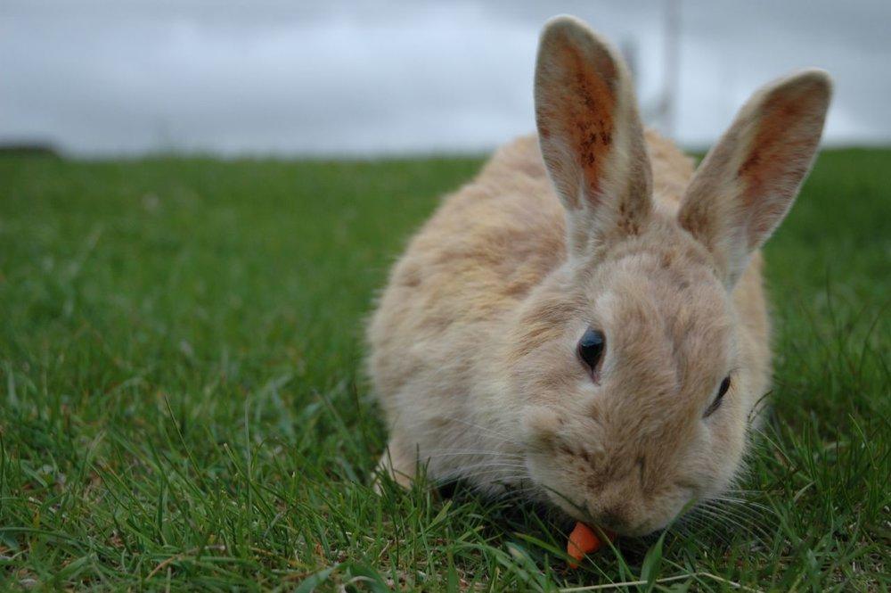 2009, 2-23 Daily Bunny