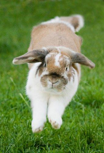2009, 2-24 Daily Bunny