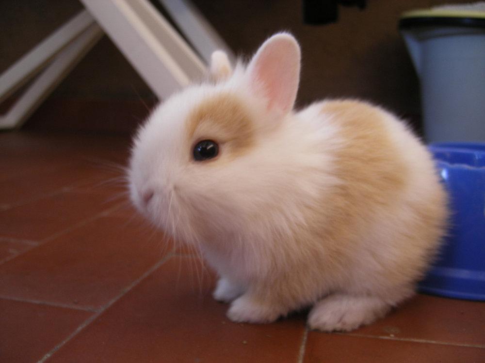 2009, 2-26 Daily Bunny