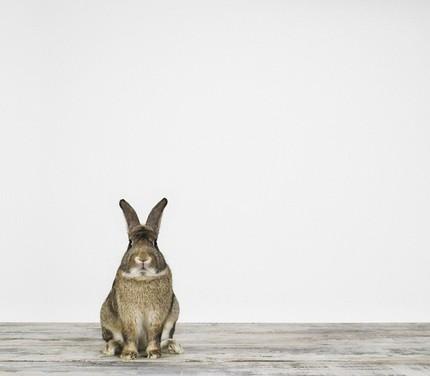 2009, 2-27 Daily Bunny