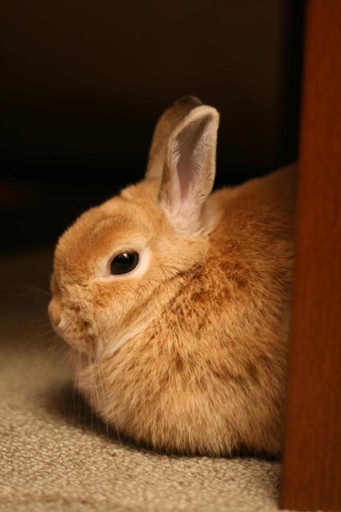 2009, 3-4 Daily Bunny