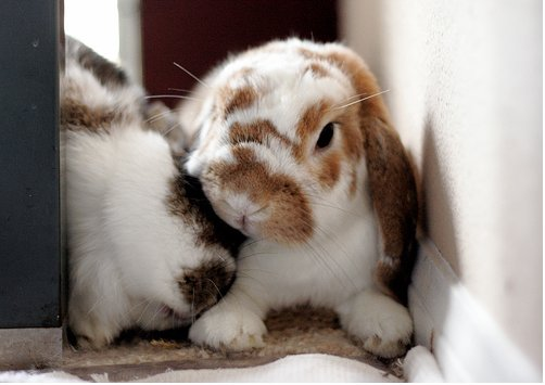 2009, 3-20 Daily Bunny
