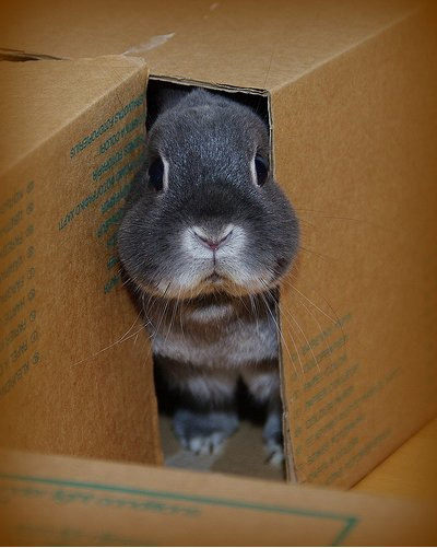 2009, 3-22 Daily Bunny