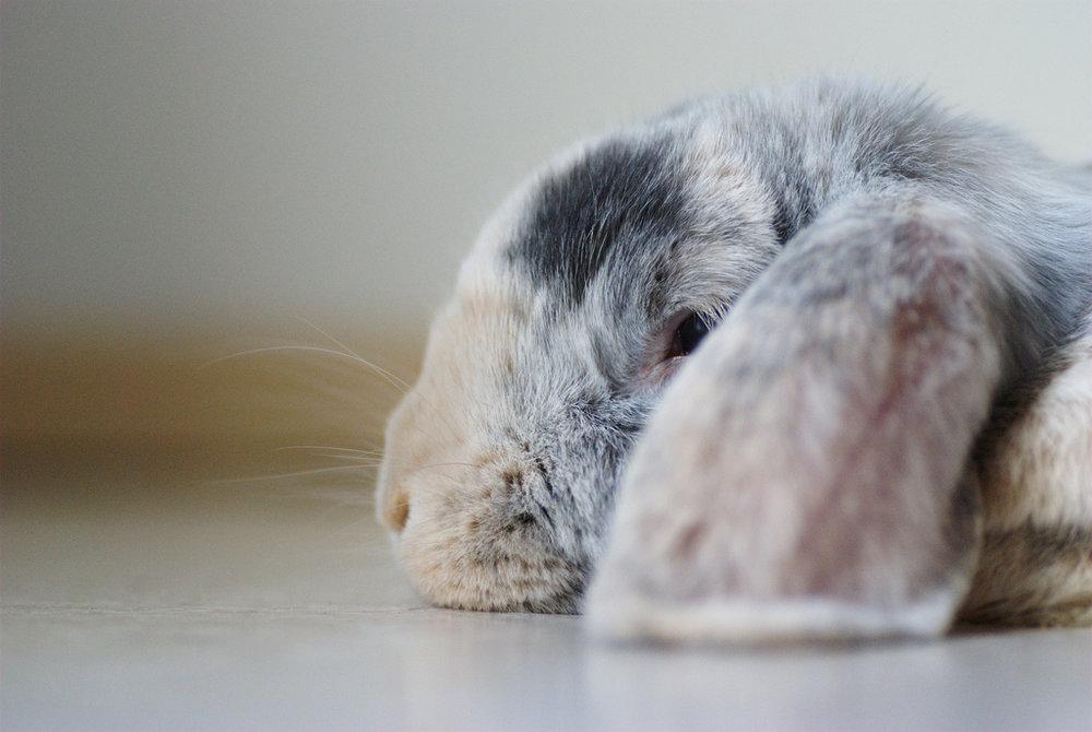 2009, 3-23 Daily Bunny
