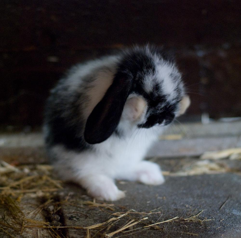 2009, 3-24 Daily Bunny