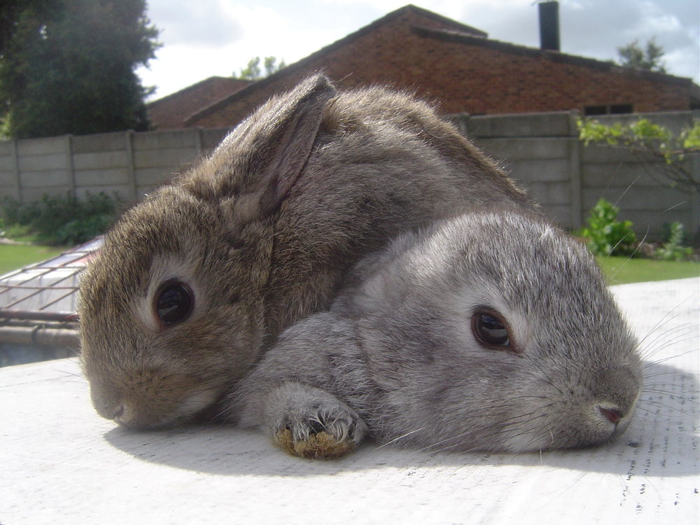 2009, 3-25 Daily Bunny