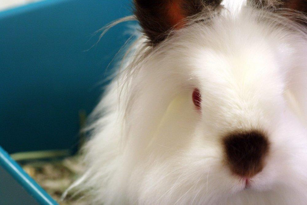 2009, 3-26 Daily Bunny
