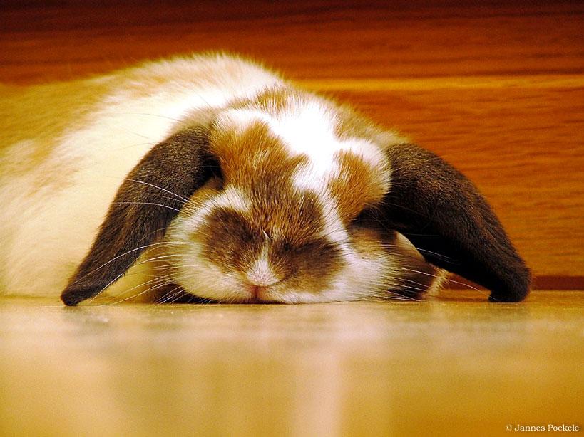 2009, 3-27 Daily Bunny