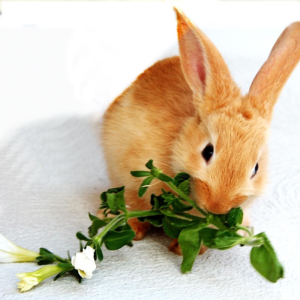 2009, 3-28 Daily Bunny