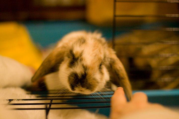 2009, 3-30 Daily Bunny