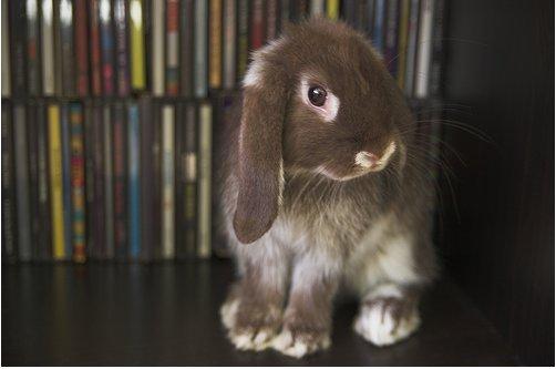 2009, 4-5 Daily Bunny