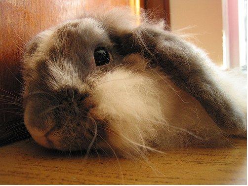 2009, 4-6 Daily Bunny