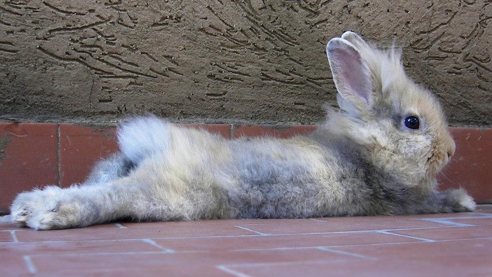 2009, 4-1 Daily Bunny