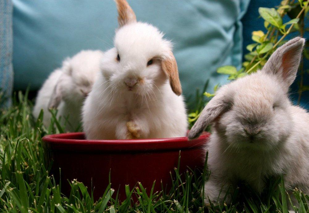 2009, 4-22 Daily Bunny