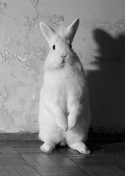 2009, 4-26 Daily Bunny