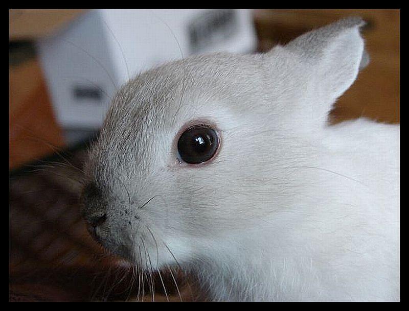 2009, 4-27 Daily Bunny