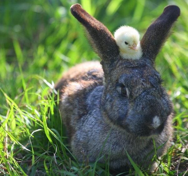 2009, 4-28 Daily Bunny