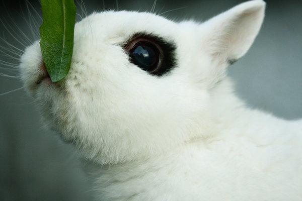2009, 4-29 Daily Bunny