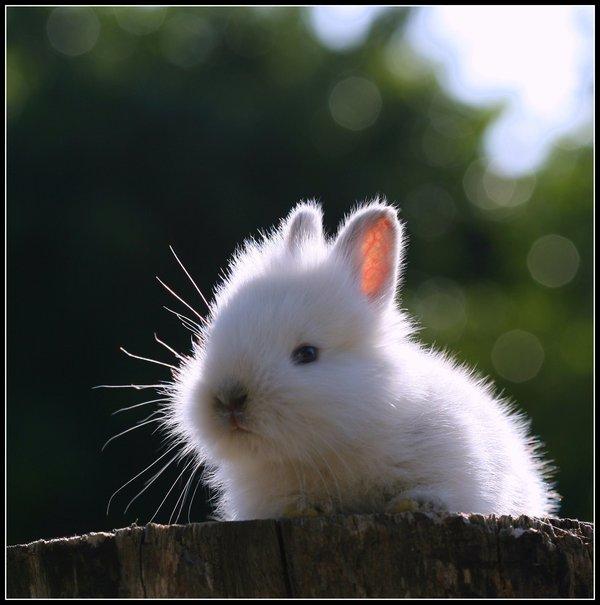 2009, 5-1 Daily Bunny