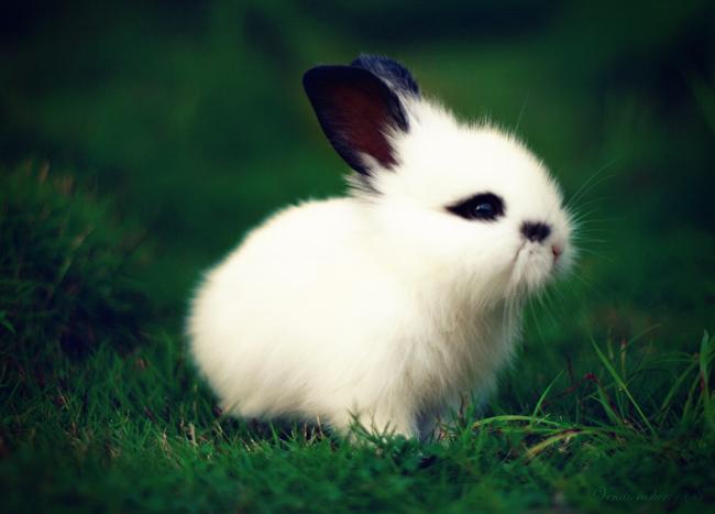 2009, 5-6 Daily Bunny