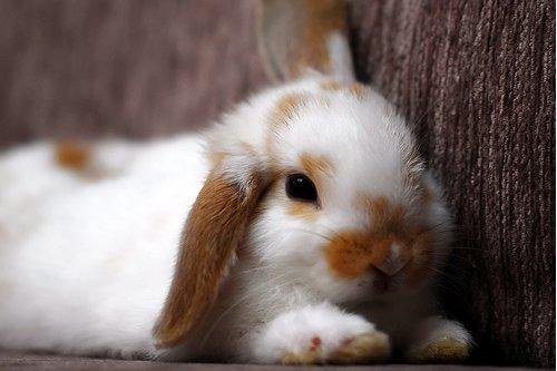 2009, 5-20 Daily Bunny