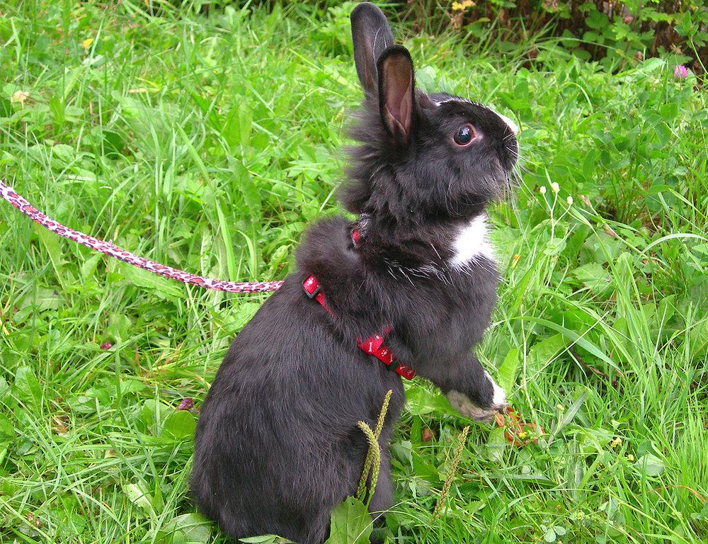 2009, 5-22 Daily Bunny